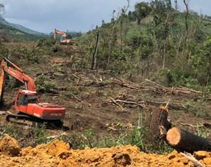 Khởi tố vụ án hủy hoại rừng đặc biệt nghiêm trọng ở Đam Rông