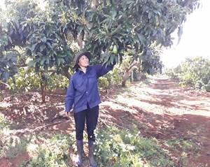 Đak Đoa (Gia Lai): Phát triển cây ăn quả đặc sản