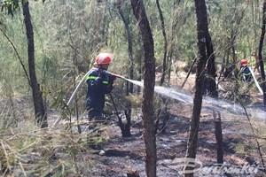 Kịp thời dập tắt đám cháy rừng thông Tam Tiến