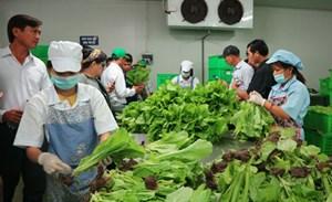 Kon Tum: Chú trọng công tác an toàn thực phẩm trong nông nghiệp