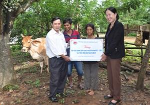 Kon Tum: Trao tặng bò sinh sản cho người khuyết tật và trẻ mồ côi