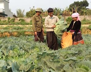 Lai Châu: Phát triển kinh tế gia đình ở vùng biên giới