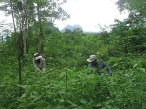 Lai Châu: Tỷ lệ che phủ rừng nâng lên