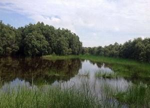 Lập rừng đặc dụng khu bảo tồn đất ngập nước Láng Sen