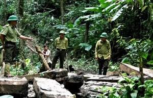 Nghệ An: Thêm 2 kiểm lâm viên bị khởi tố trong vụ chặt 189 cây Pơ mu