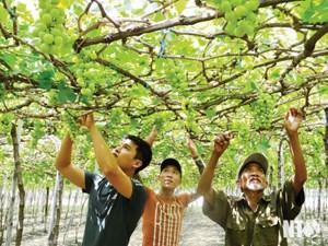 Lương Sơn (Ninh Thuận): Nâng cao chất lượng cuộc sống của người dân