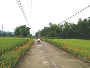 Những con đường nở hoa ở Tân Tiến