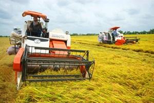 Nông dân phấn khởi vì giá lúa tăng cao