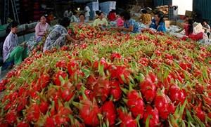 Xuất khẩu nông sản và hy vọng khởi sắc