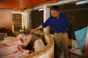 Lâm Đồng: Đàn lợn vẫn tăng trong bão dịch