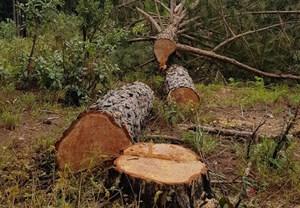 Lâm Đồng: Xử lý trách nhiệm nhiều tập thể, cá nhân để xảy ra các vụ phá rừng lớn tại Lâm Đồng