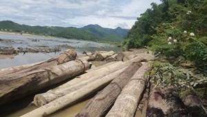 Phát hiện 23 khúc gỗ tròn 'vô chủ' ở bờ sông Vu Gia