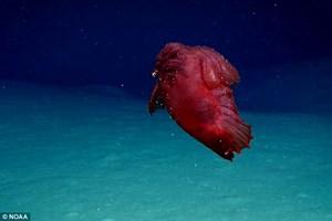 Phát hiện quái vật không đầu dưới biển sâu
