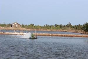 Phê duyệt Đề án khung phát triển tôm nước lợ