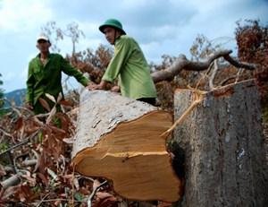 Phú Yên: Chấn chỉnh tồn tại trong quản lý rừng