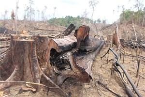 Quảng Nam: Họp HĐND tỉnh, nóng vụ phá rừng Tiên Lãnh