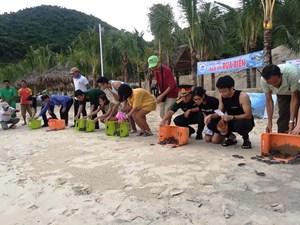 Quảng Nam thả hơn 400 cá thể rùa biển về đại dương