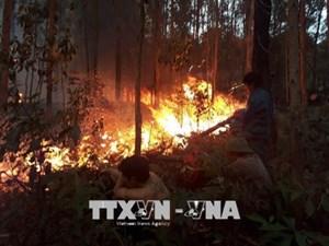 Quảng Ninh: Cháy lớn ở rừng thông tại Đại Yên