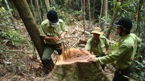 Quảng Trị: Quản lý rừng bằng máy tính bảng