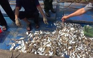 Quảng Trị: Xác định nguyên nhân cá chết ở biển