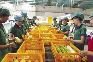 Rào cản xuất khẩu nông sản