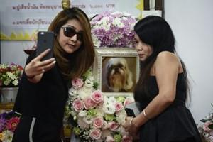Rộ trào lưu tổ chức đám tang cho thú cưng ở Thái Lan
