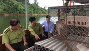 Hà Tĩnh: Thả 12 cá thể khỉ quý hiếm về rừng