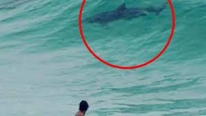 Sinh vật bí ẩn thân cá heo, đuôi cá mập ở bãi biển Australia