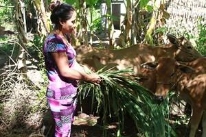 Đời sống của đồng bào Khmer ngày càng cải thiện