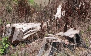 'Tan nát' Khu Bảo tồn thiên nhiên Nam Kar ở tỉnh Đắk Lắk