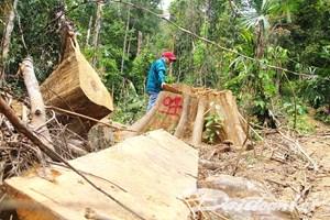Tan nát rừng phòng hộ Sông Kôn