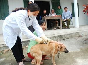 Tăng cường các biện pháp cấp bách phòng chống bệnh dại ở Tây Nguyên