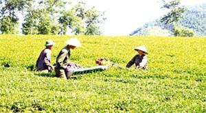 Tăng sức để phát triển nông nghiệp