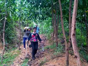 Tạo sinh kế cho rừng
