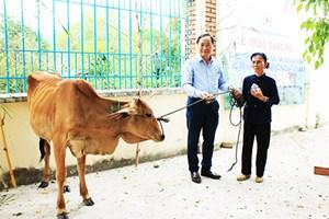 Cam Lâm (Khánh Hòa): Trao bò giống cho hộ nghèo