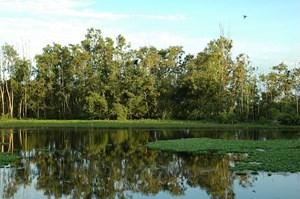 Thành lập rừng đặc dụng Khu Bảo tồn đất ngập nước Láng Sen