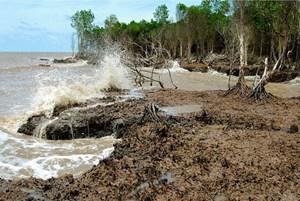 Thích ứng với biến đổi khí hậu đồng bằng sông Cửu Long: Bắt đầu từ sự phát triển bền vững