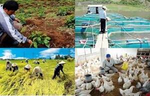 Thông tư hướng dẫn các Tổ chức tín dụng cho vay phát triển nông nghiệp