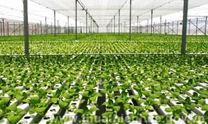 Thừa Thiên - Huế phát triển nông nghiệp công nghệ cao