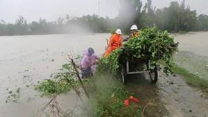 Trung ương Hội Chữ thập đỏ cứu trợ khẩn cấp gần 1,1 tỷ đồng