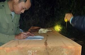 Kon Tum: Bắt giữ lâm tặc chở gỗ lậu