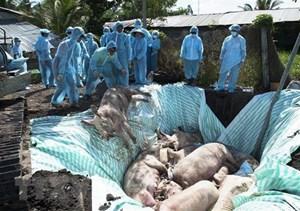 Việt Nam và Hoa Kỳ hợp tác nghiên cứu vaccine dịch tả lợn châu Phi