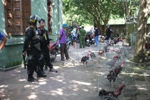 Gia Lai: Phát hiện một sới gà hoạt động trong khu du lịch sinh thái