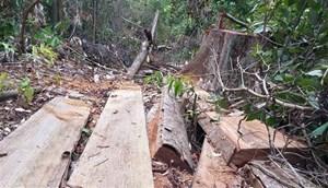Đắk Lắk: Phát hiện, xử lý nhiều vụ phá rừng dịp Tết