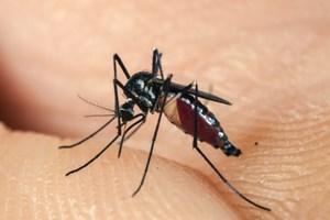 Đắk Lắk: Thêm một người tử vong do bệnh sốt xuất huyết