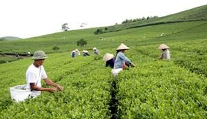 Tuyên Quang: Giúp người dân phát triển kinh tế