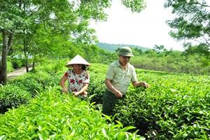 Tuyên Quang: Hiệu quả từ mô hình điểm về giảm nghèo và bảo vệ môi trường