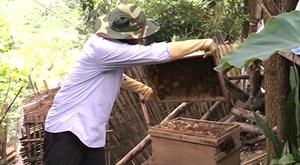 Tuyên Quang: Nuôi ong lấy mật, vươn lên thoát nghèo
