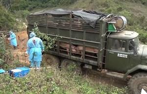 Phát hiện, tiêu hủy số lượng lớn lợn vận chuyển trái phép
