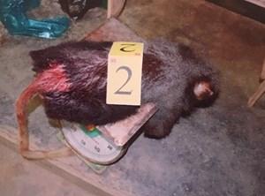 Khởi tố đối tượng mua bán, tàng trữ động vật rừng quý hiếm